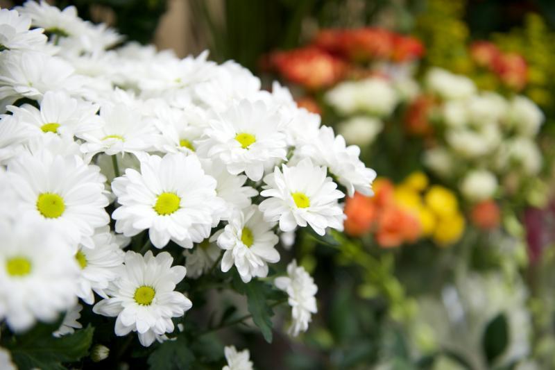 Florateria - Photo 44