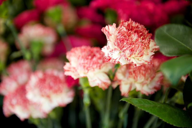 Florateria - Photo 87