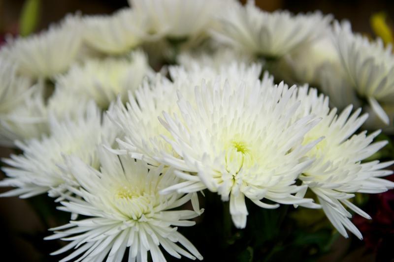 Florateria - Photo 91