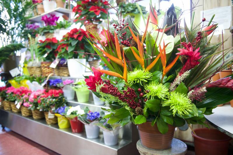 Florateria - Photo 51