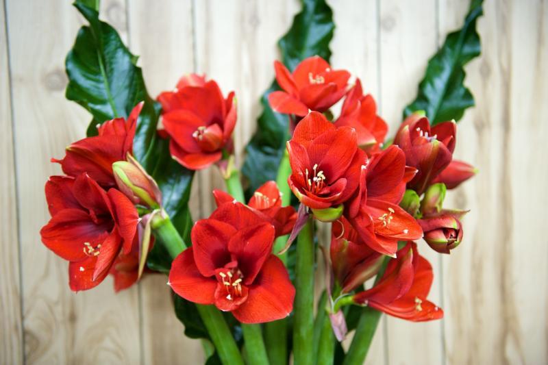 Florateria - Photo 49