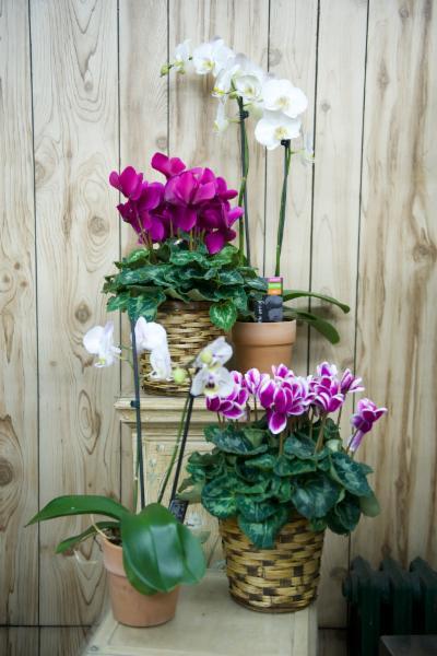Florateria - Photo 67