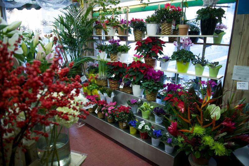 Florateria - Photo 13