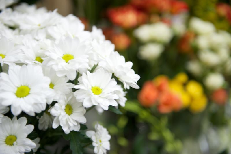 Florateria - Photo 43