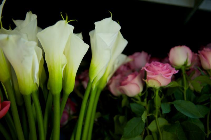 Florateria - Photo 79