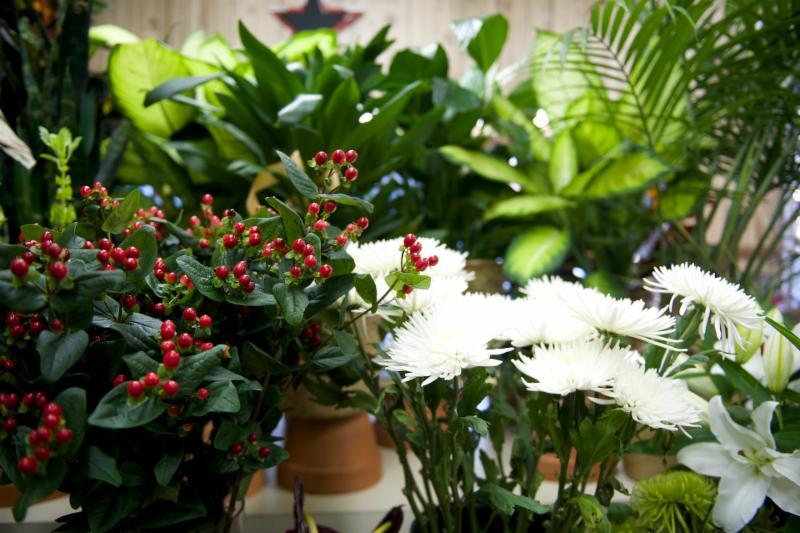 Florateria - Photo 45