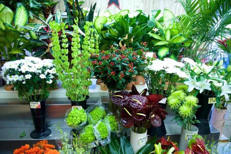 Florateria - Photo 36