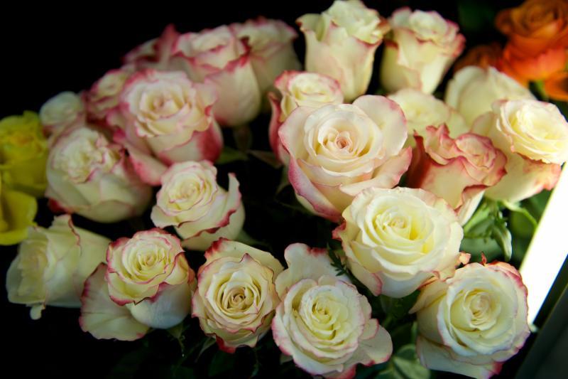 Florateria - Photo 77