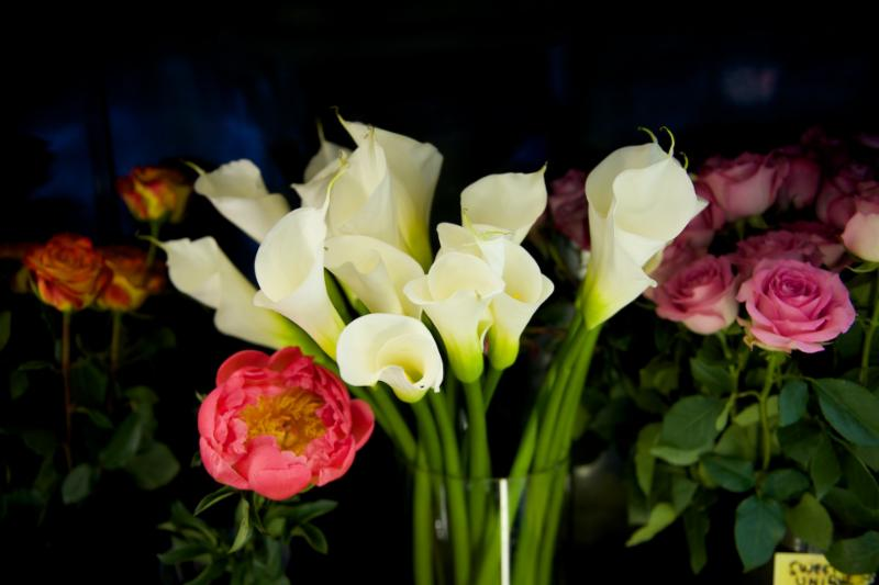 Florateria - Photo 86