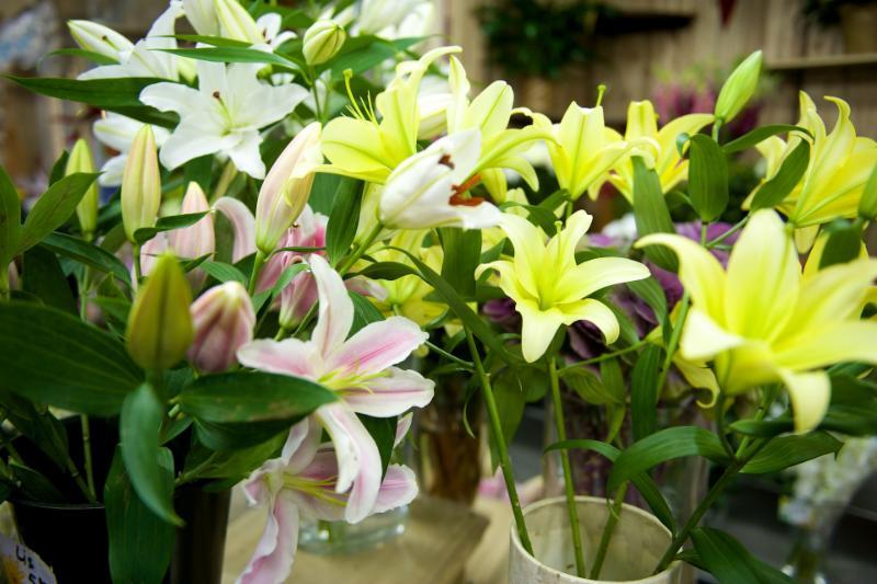 Florateria - Photo 39