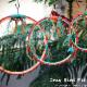 Cozy Bird - Animaleries - 416-491-8381
