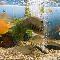 Marta's Pet & Aquaria - Pet Shops - 416-242-2619