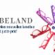 Lunetterie Béland & Tremblay - Eyeglasses & Eyewear - 418-834-7770