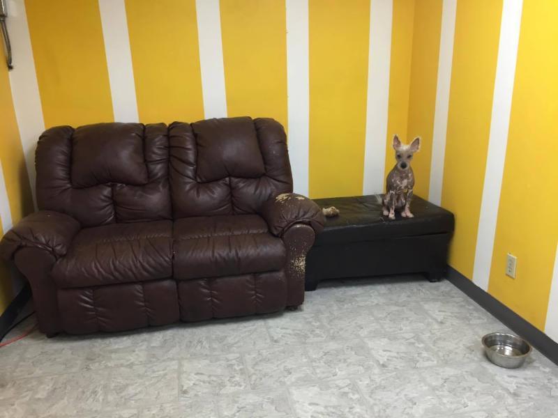Dog Grooming Trenton Ontario