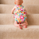 Alberta Pro Cleaning Solutions - Carpet & Rug Cleaning - 403-948-4048