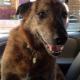 Kari's Bark in the Park - Pet Sitting Service - 604-788-7843