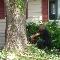 Nelson Emondeur - Service d'entretien d'arbres - 514-727-7946