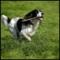 Centre Canin Legardeur - Toilettage et tonte d'animaux domestiques - 450-470-1499