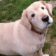 TLC Pet Care - Pet Sitting Service - 506-871-0290