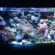 Empire Reef - Aquariums et accessoires - 204-688-4006