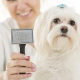 Good Form Grooming - Pet Grooming, Clipping & Washing - 780-839-4040