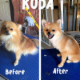 Kreative Kutz Dog Grooming - Pet Grooming, Clipping & Washing - 306-205-1138
