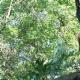 Service d'Arbre & Émondage Tougas - Service d'entretien d'arbres - 450-272-4189