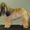 Tiffany's Grooming Salon - Pet Food & Supply Stores - 604-526-5026