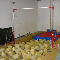 Academy Of Sport And Fitness - Kindergartens & Pre-school Nurseries - 905-780-0913