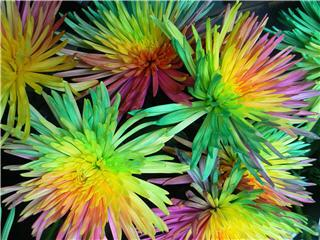 Fleurs En Folie - Photo 9