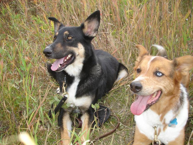 Dog Training Calgary Nw