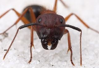 Bed Bug Exterminator 2017