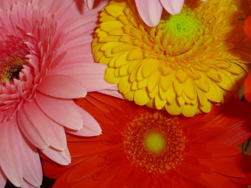 Fleurs coupées équitables