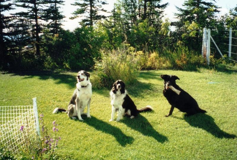 Dog Grooming Montreal Road Ottawa