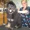 Salon de Toilettage Professionnel Moustache - Toilettage et tonte d'animaux domestiques - 5148334163