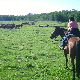 Penner Horseback Adventures Ltd - Horseback Rides - 780-207-5474
