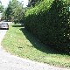 Yvan Beaulieu Hedges & Gardens - Service d'entretien d'arbres - 6138786242