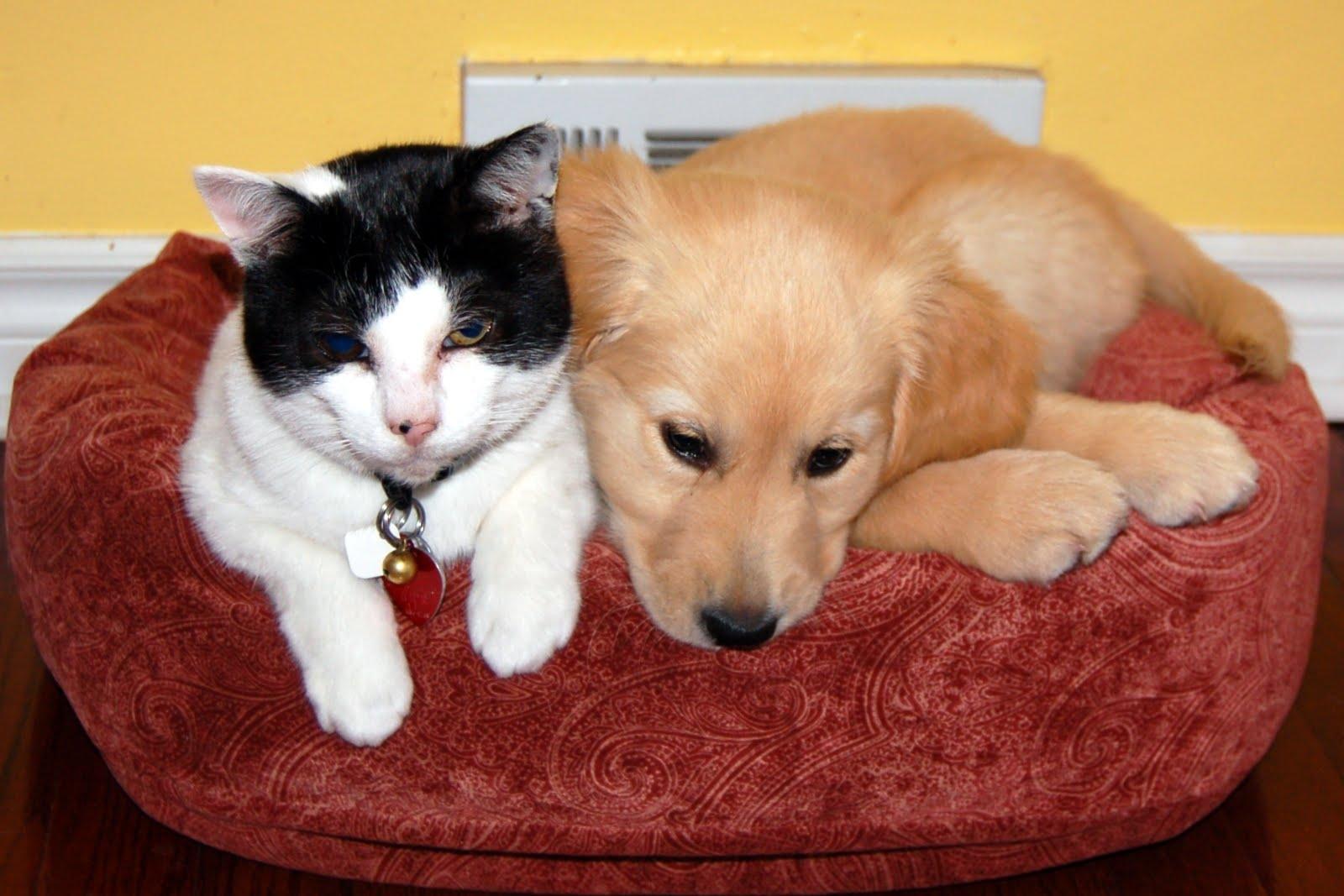 Creature Comforts Pet Services - Garderie d'animaux de compagnie - 905-278-9738