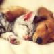 Henderson Animal Hospital - Magasins d'accessoires et de nourriture pour animaux - 204-339-9295