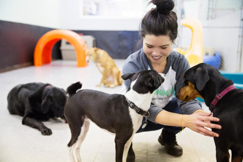 Dog Day Care Bayview