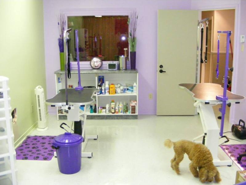 Toilettage zen horaire d 39 ouverture 446 rue - Salon toilettage chien ...
