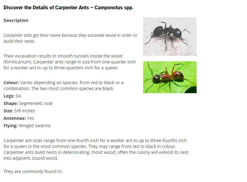 Discover the Details of Carpenter Ants ¿ Camponotus spp.