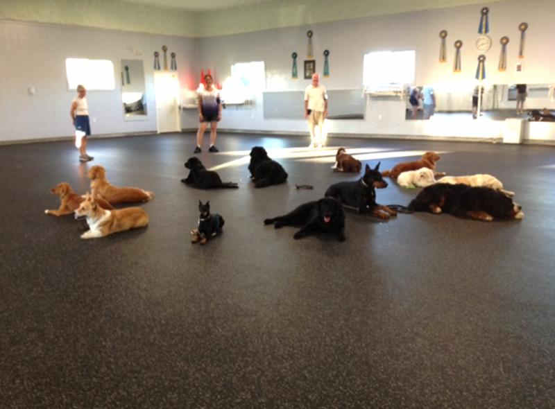 photo TNT Kennels & Training Center