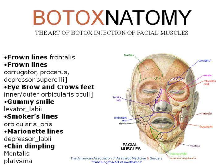 Botox anatomy