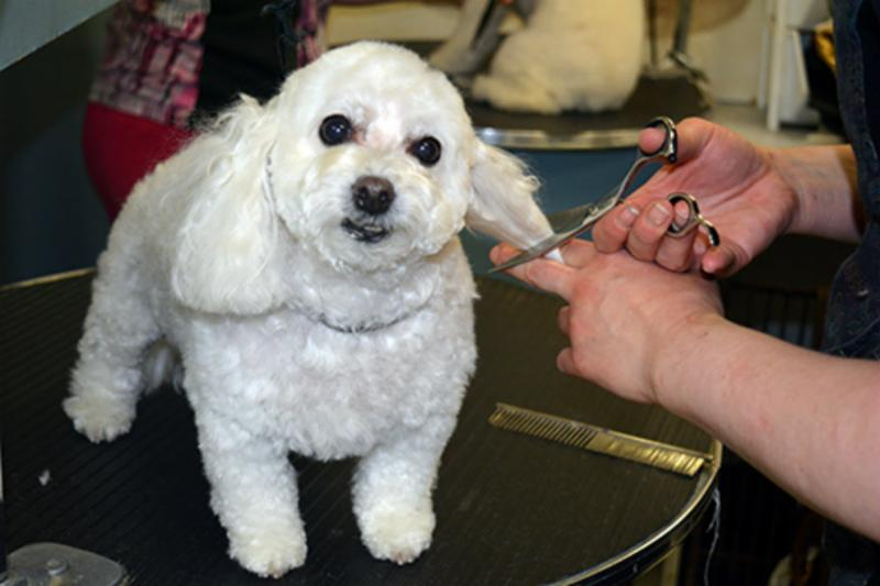 Dog Grooming School Mississauga