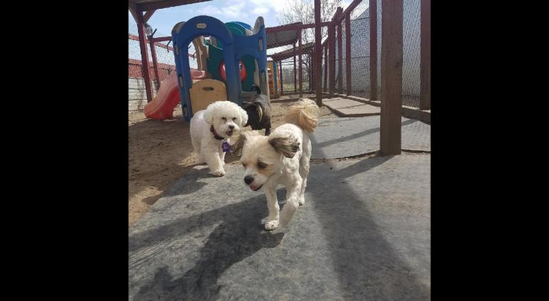 Second Home Pet Resort Leduc