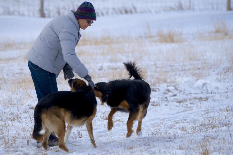 Dog Training Boarding Calgary