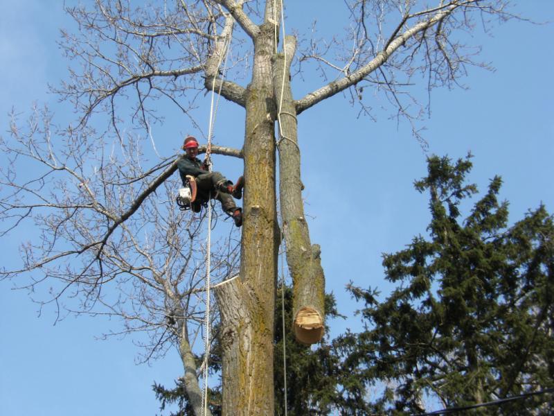 photo Capella Tree Service