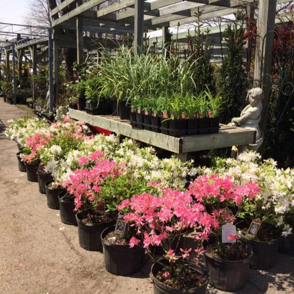 Backyard Landscaping Oakville : Bulow f garden centre landscaping oakville on south service rd w canpages