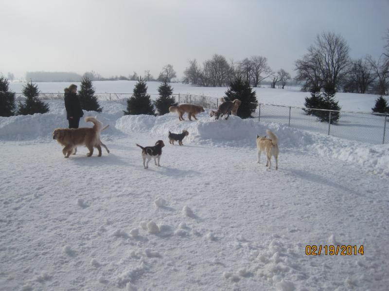 Home From Home Dog Boarding Peterborough